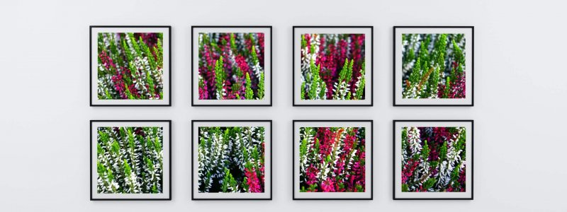 eight-photo-frame-of-flowers-1100008